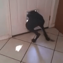 chien qui s'enfuit