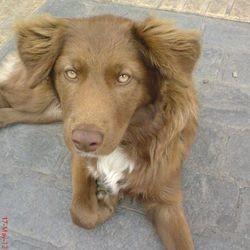 le sauvetage d'un chien errant