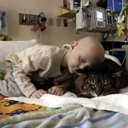 chat de thérapie