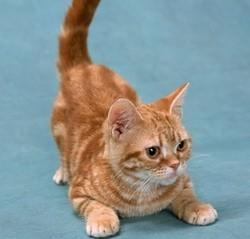 comprendre son chat comportementaliste chat