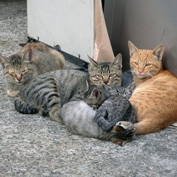 85 chats maison
