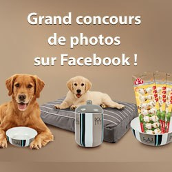 concours photos friandises 8in1