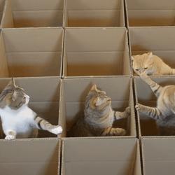 chats cartons