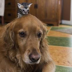 un chien de thérapie adopte des chatons orphelins