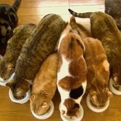 9 chats prennent leur petit déjeuner