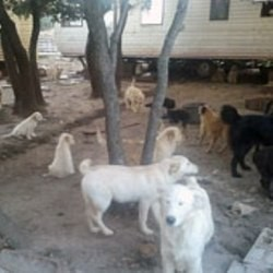 40 chiens sauvés par la fondation 30 millions d'amis