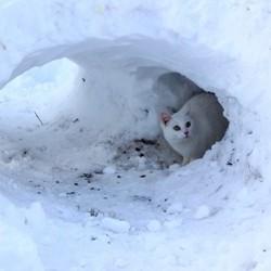 abri pour chat errant