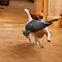 acheter jouet nourriture chien