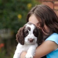 adopter un animal