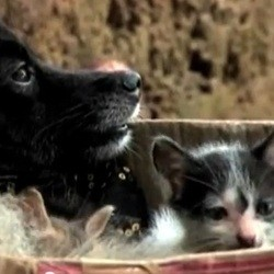 adoption chatons par chien video inde