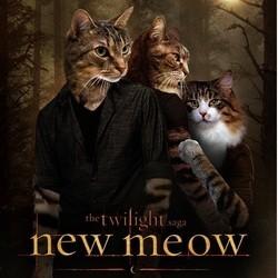 détournement affiches films chats