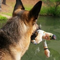 agression chien postier