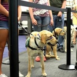 Des cours pour apprendre aux chiens à prendre l'avion