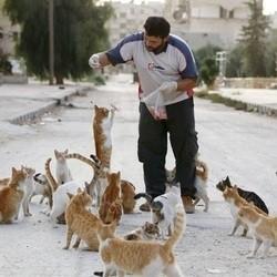 un homme nourrit des chats errants en Syrie