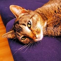 Gestation : quelle alimentation pour les chiens et chats
