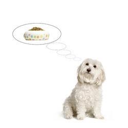 alimentation du chien conseils royal canin