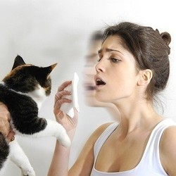 allergie chat vaccin