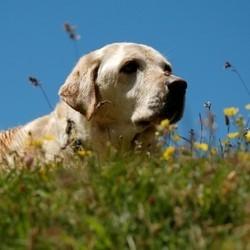 allergies saisonnières animaux