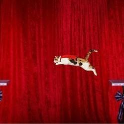 chat record saut le plus long