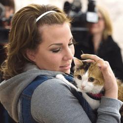 elle retrouve son chat 6 ans après sa dipsarition