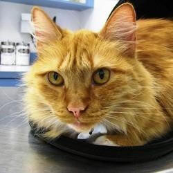amener chat veterinaire