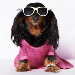 ligne vêtements pour chien