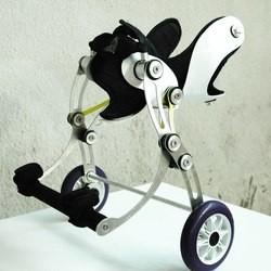 amigo dog wheelchair chien handicapé