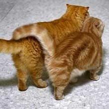 amitié entre chats