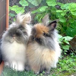 amitié et cohabitation entre animaux