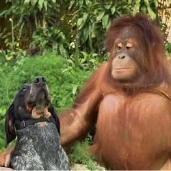 chien singe