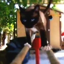 les animaux de compagnie en compétition aux jeux olympiques