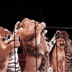 animaux cirque