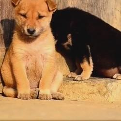 Des animaux épuisés luttent contre la fatigue