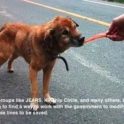 évacuation animaux fukushima japon