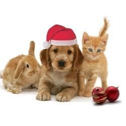 Des idées de cadeaux de Noël pour vos chiens, chats et rongeurs