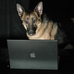 animaux soins internet vétérinaire