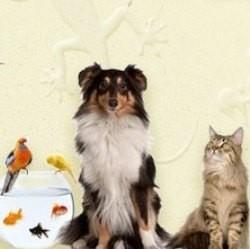 concours animo shop alimentation animal de compagnie