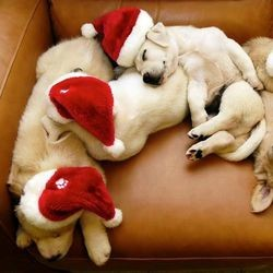chiots endormis