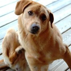 anti puce et anti tique pour chien et chat