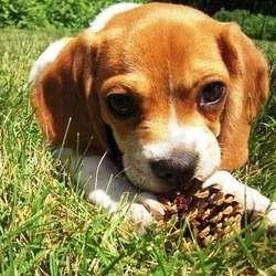 appel dons justice garde chien