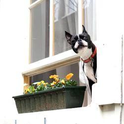 apprendre la solitude à son chien avec un comportementaliste canin