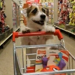 video tours de chien