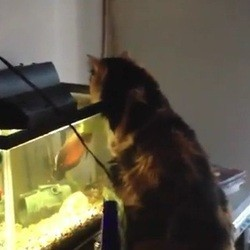 chat aquarium poisson gag
