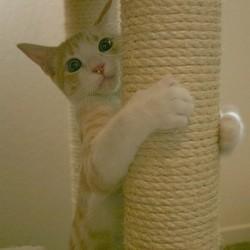 chat griffoir