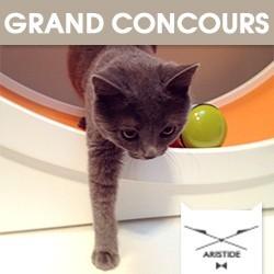 concours avez vous gagn un pass week end chez aristide pour votre chat loisirs wamiz. Black Bedroom Furniture Sets. Home Design Ideas