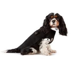 vetement pour chien emporio armani