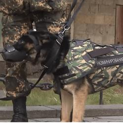 armure chien d'assaut