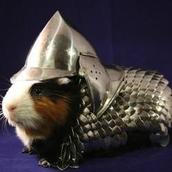 une armure pour cochon d'inde fait le buzz sur ebay