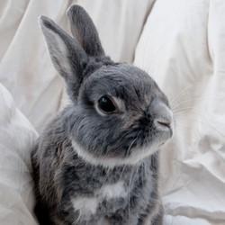 manifestation anti fourrure lapin pékin