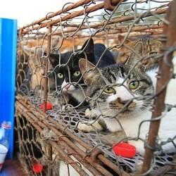 500 chats échappent à la mort en chine